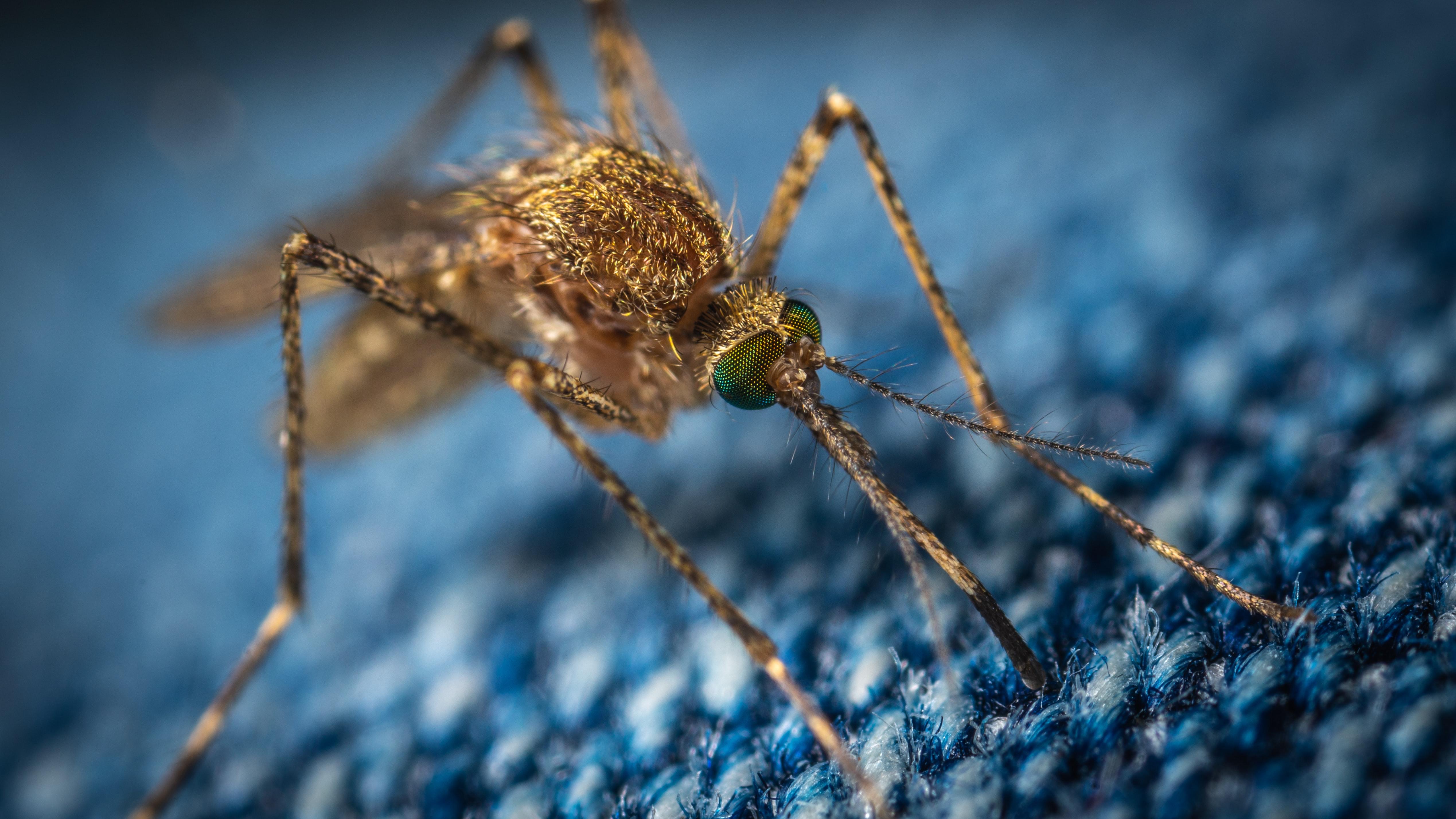 Les moustiques sont de retour… et leurs piqûres aussi !